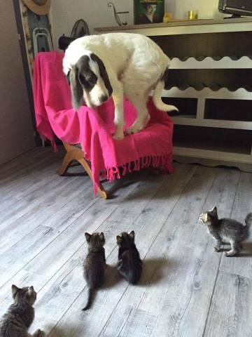 Scaredy Dog (Image via gem 106)
