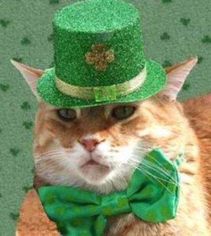 Ginger St. Patrick's Cat