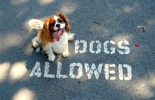 Ironic Dog