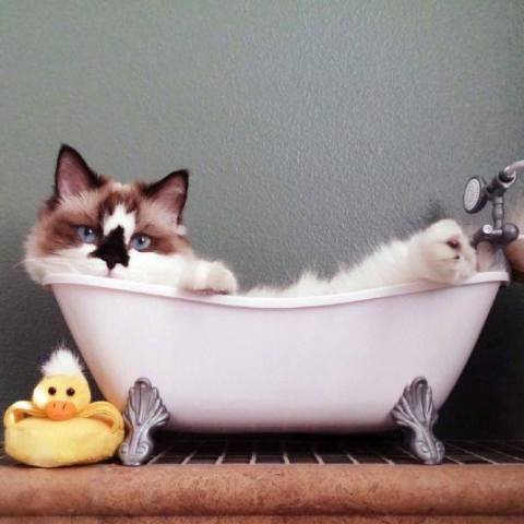 Bath Cat (Image via Tickld Cute)