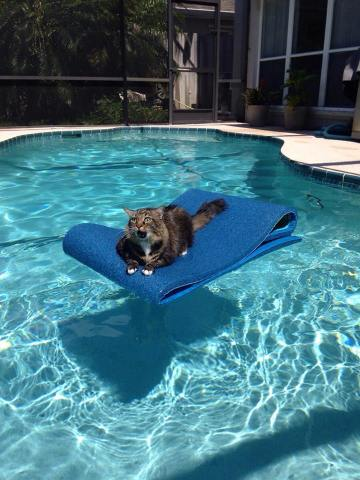 Pool Cat (Image via Jackson Galaxy)