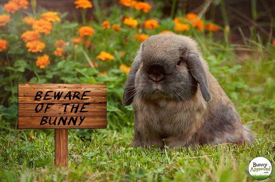 Grumpy Bunny
