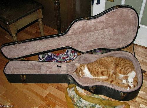 Guitar Cat (Image via Facebook)