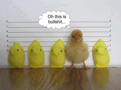 Chick Line-Up