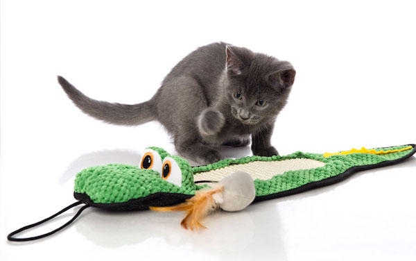 Gator Scratch Toy
