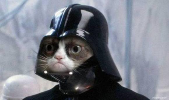Grumpy Vader Cat (Image via I Love Halloween)