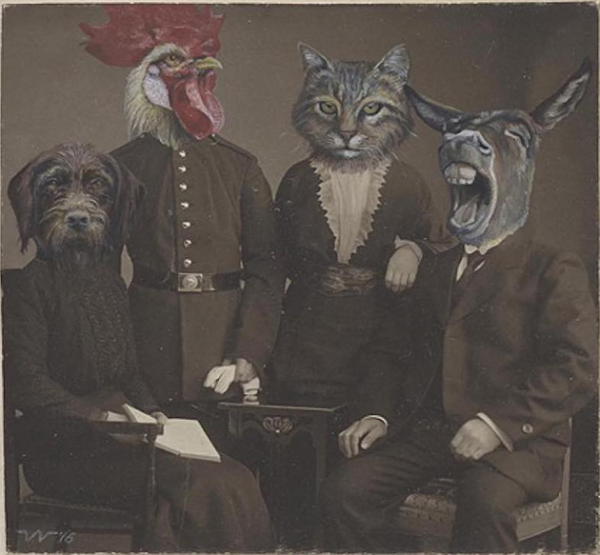 Invasive Animals Photobomb Vintage Photography