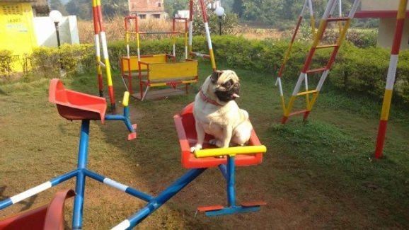 Puggy-Go-Round (Image via Facebook)