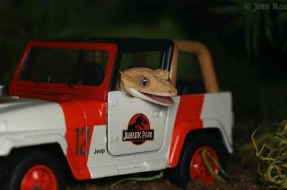 LARPing Lizard