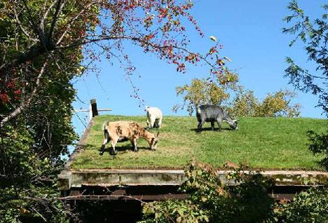 Goats on the Roof (Image via Faerie Magazine)