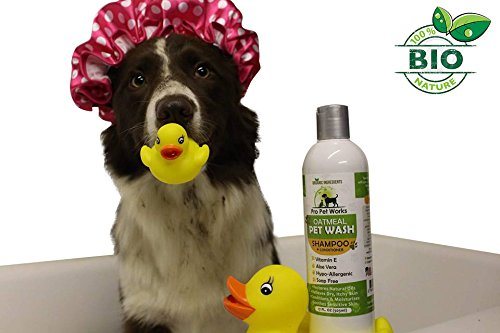 https://www.amazon.com/Pro-Pet-Works-Hypoallergenic-Conditioner/dp/B018FGSTT4/ref=sr_1_4?ie=UTF8&qid=1486331015&sr=8-4&keywords=best+dog+shampoo+for+skin+allergies