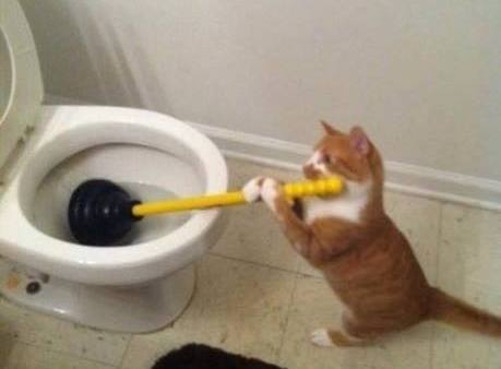 Toilet Cat (Image via Tickld)