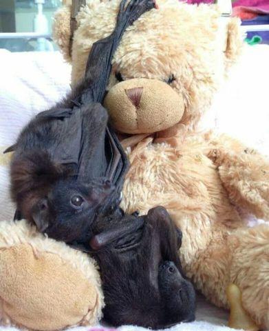 Snuggling Bat