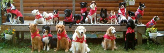 Dog Scouts of America: image via dogscouts.org