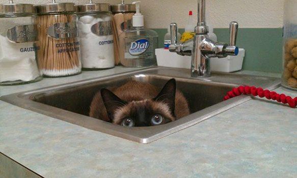 Hiding Cat (Image via The Best of Tumblr)
