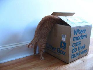 "ModKat, ""Where Modern Cats Do Their Business"" (No, not there kitty!): image via facebook.com/modko"