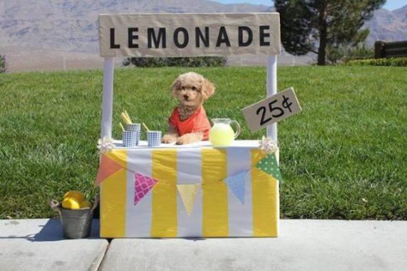 Lemonade Dog (Image via iHeartDogs)