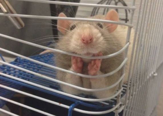 Hamster Inmate