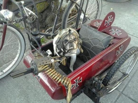 Red Baron Dog (Image via The Official Keith Thomson Author Page)