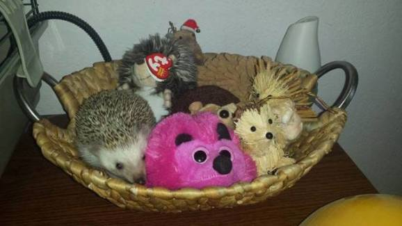 Hidden Hedgehog (Image via George Takei)