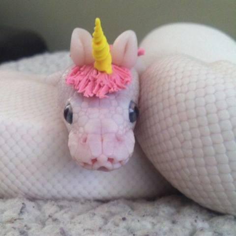 Unicorn Snake