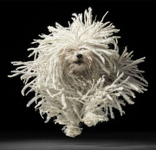 Mop Dog (Image via imgur)