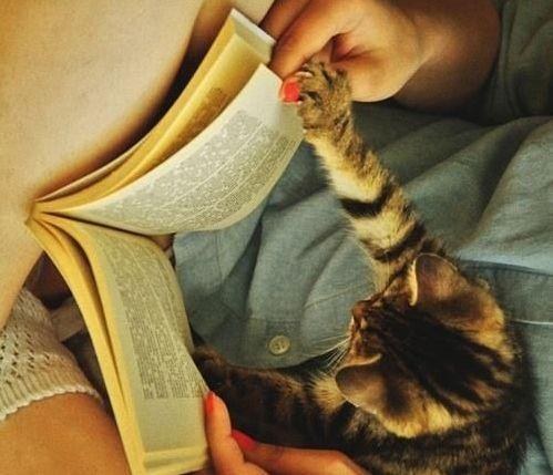 Book Kitten (Image via The Crazy Cat)