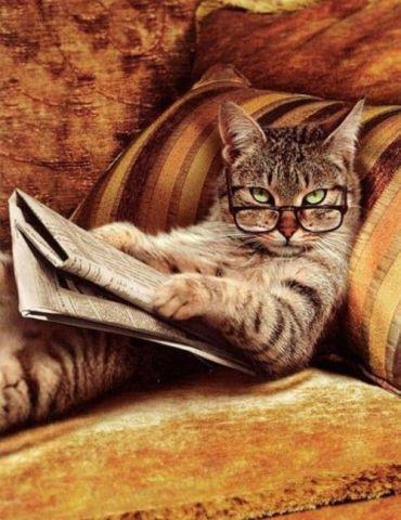 IRS Cat (Image via tumblr)
