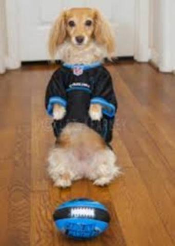 Carolina Panthers Fashion Dog