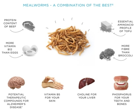 What mealworms can do for you!