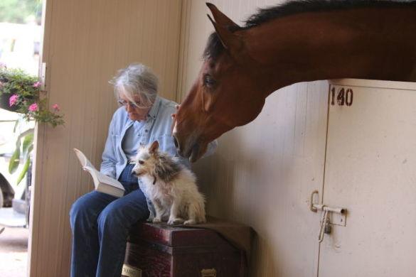 Reading Horse (Photo by dregsplod/Creative Commons via Wikimedia)
