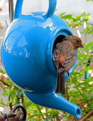 Teapot Bird