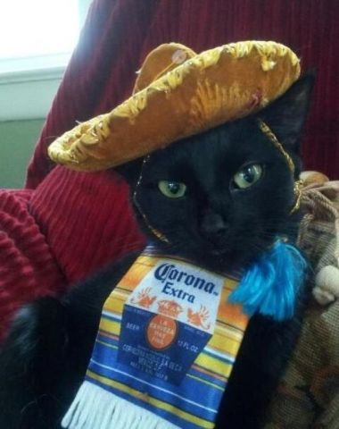 Cinco de Mayo Cat