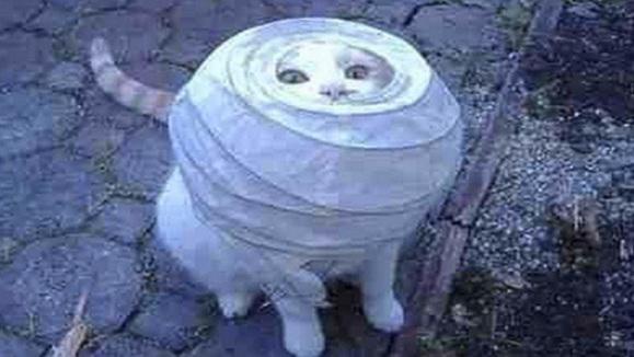 Paper Lantern Cat