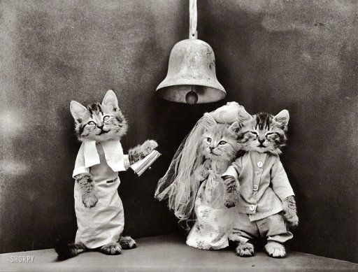 Bridal Kittens
