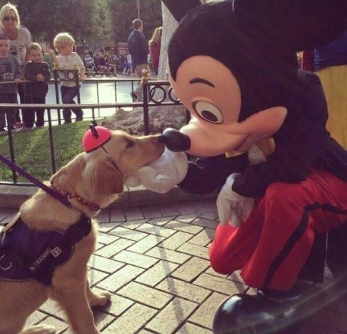 Mickey Mouse Dog (Image via The EmBARKadero)