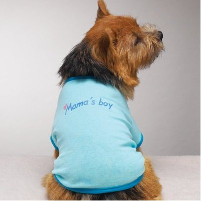 Mama's Boy dog t-shirt by Zack & Zoey