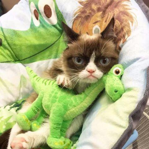 Grumpy Dinosaur-Loving Cat