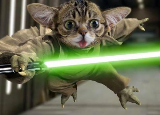 Lil Yoda Bub