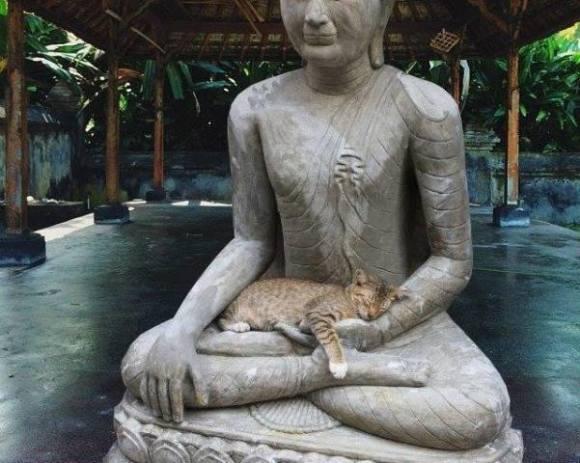 Buddha Cat (Image via Facebook)