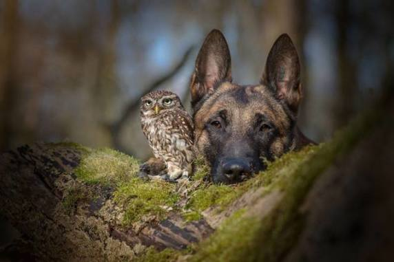 Dog and Owl (Image via Architecture & Design)