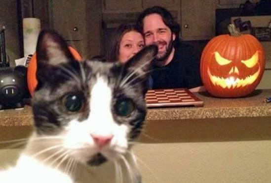Scaredy Cat (Image via George Takei)