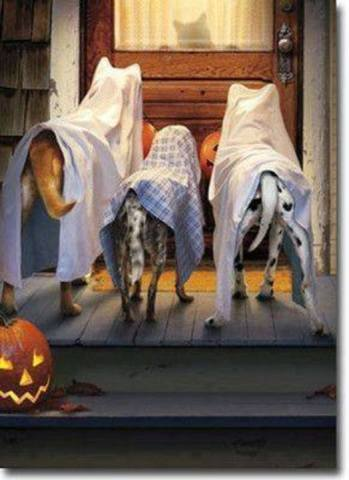Ghost Dogs (Image via Dogs are Family)