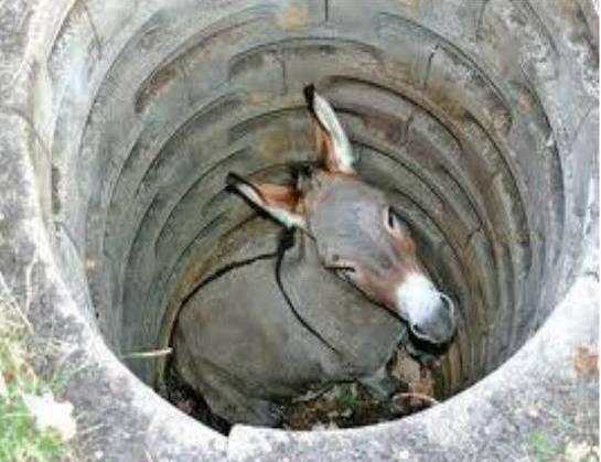 Accident-Prone Donkey