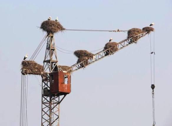 Cranes on a Crane