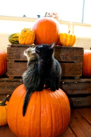 Great Pumpkin Kittens (Image via tumblr)