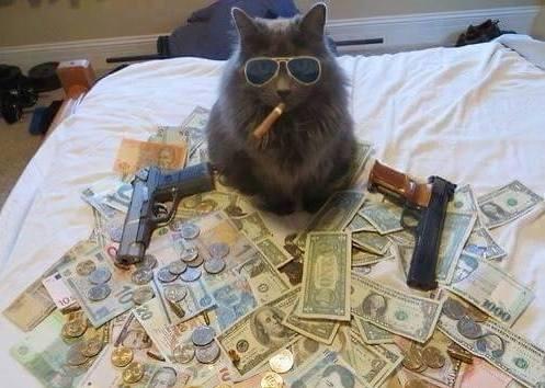 Mob Boss Cat