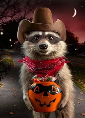 Raccoon Bandit (Image via Ebay)