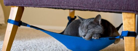 Vladimir enjoys a cat nap in the Kitty Cradle: © Mark Martinez Photograph