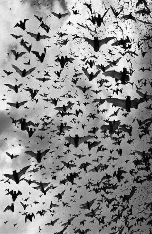 Bats (Image via Pinterest)